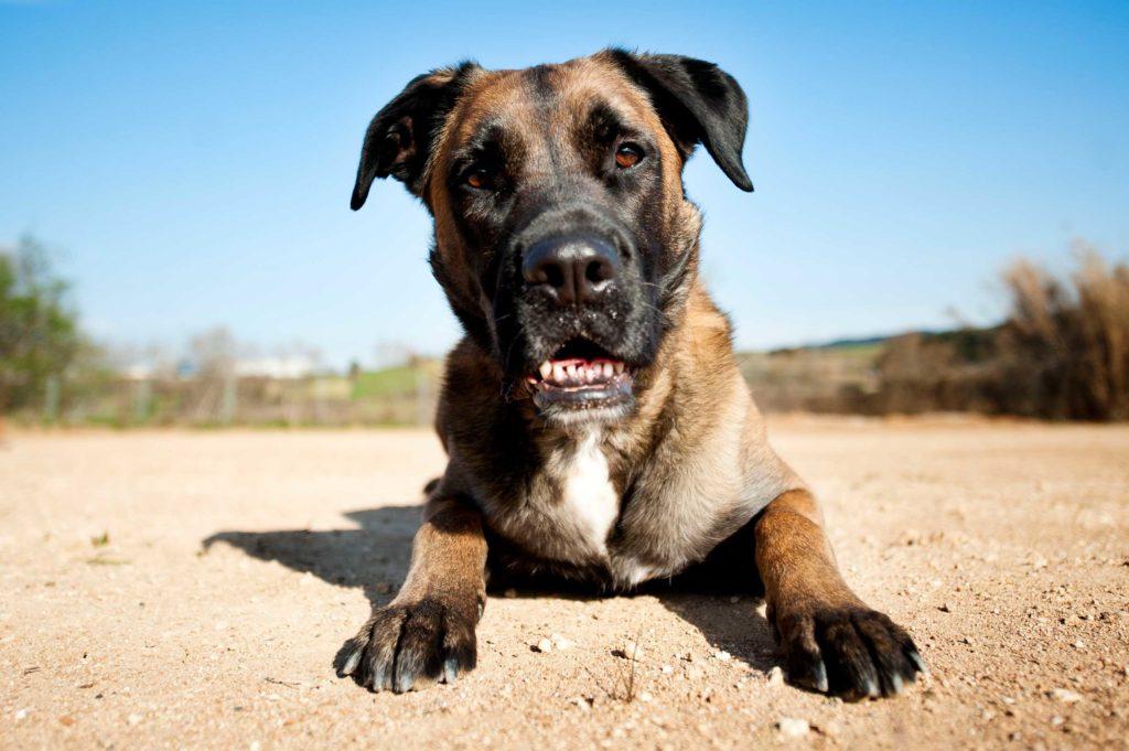 Nosotros Perro en Pelutopia escuela de etologia canina en Barcelona en el Penedes