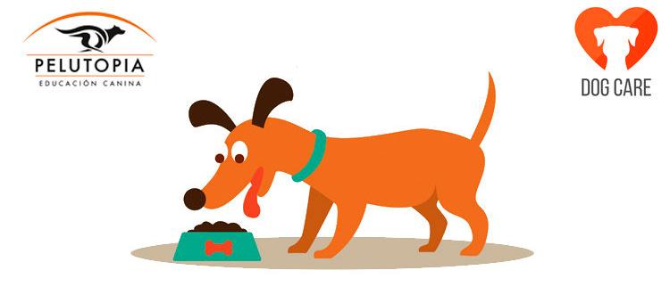 Dieta natural perros barf