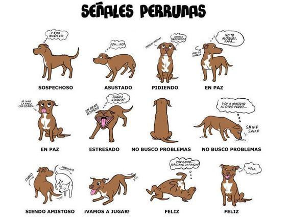 La llegada de un cachorro socializacion y comunicacion