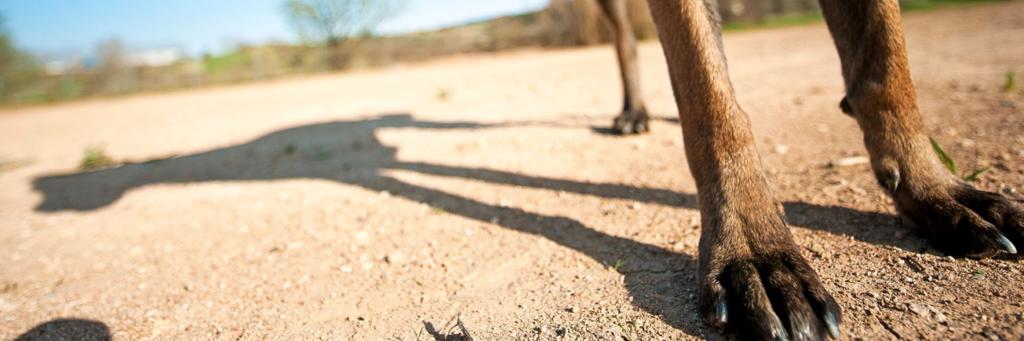 La deuda con los perros - Pelutopia escuela de etologia canina en Barcelona
