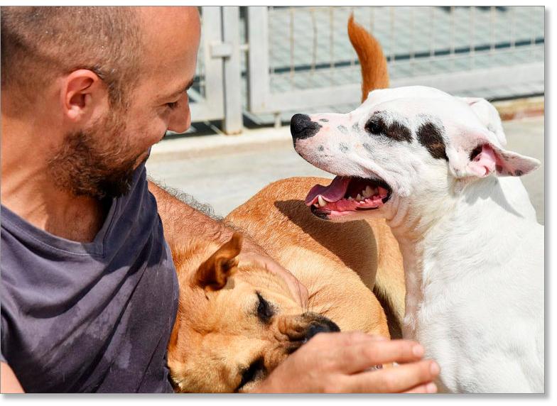 Asesoramiento perros adoptados