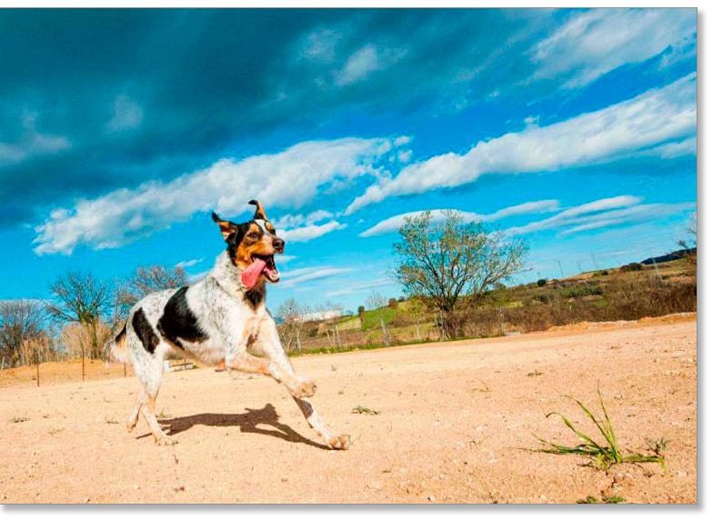Servicios de etología canina: clases de comunicación