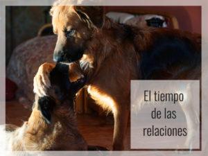 El tiempo de las relaciones de los perros