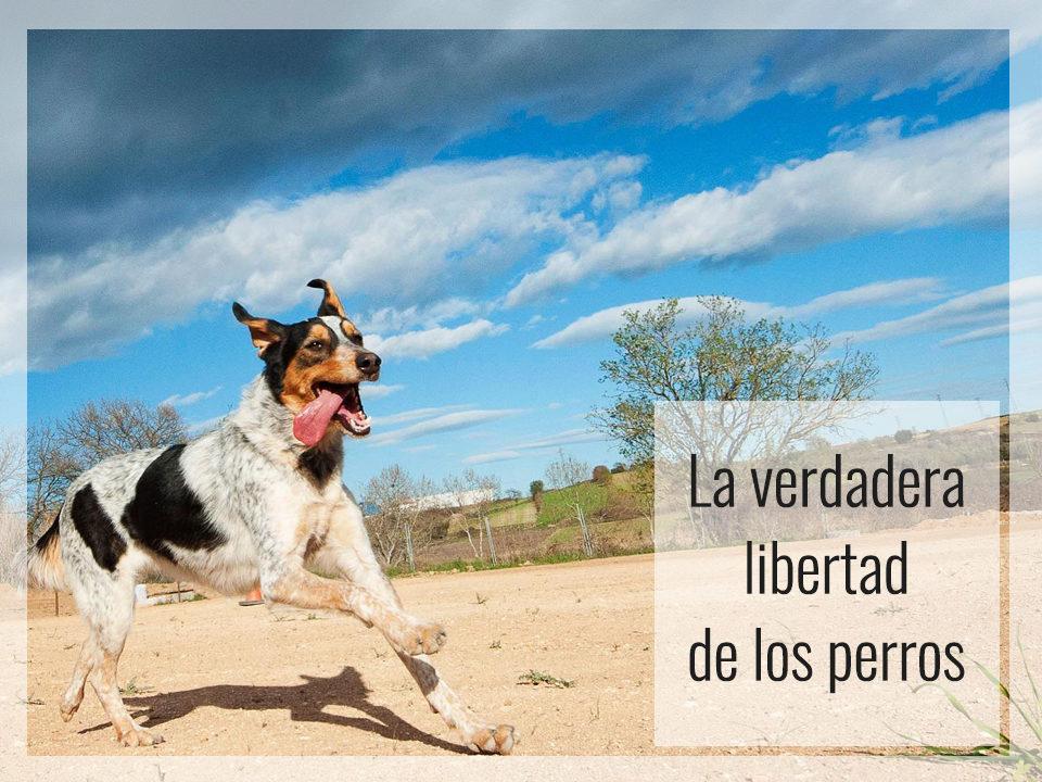La verdadera libertad de los perros reflexiones