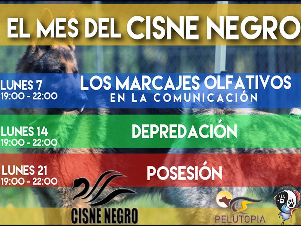 Webinar - el mes del Cisne Negro etología canina y comunicación
